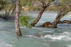 затопленные деревья Стоковые Изображения
