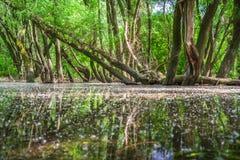Затопленные леса приближают к реке Дунаю, Словакии стоковые изображения rf
