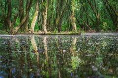 Затопленные леса приближают к реке Дунаю, Словакии стоковое фото