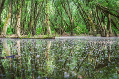 Затопленные леса приближают к реке Дунаю, Словакии стоковая фотография rf