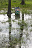 затопленные поля Стоковые Фотографии RF