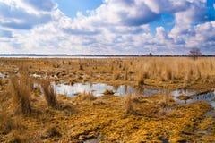 Затопленные луга в предыдущей весне Стоковые Фотографии RF