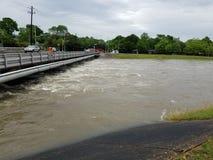 Затопленный заболоченный рукав реки Стоковая Фотография