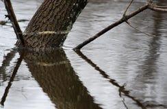 затоплено Стоковые Изображения RF