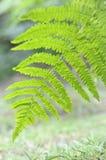затормозите листья папоротника стоковое изображение rf