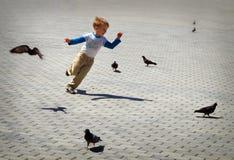 затравливание голубей Стоковое Фото