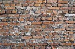 Затрапезная стена от красных кирпичей Стоковые Изображения