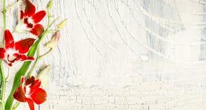Затрапезная шикарная предпосылка с красной орхидеей цветет, взгляд сверху Стоковое Фото