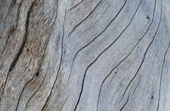 Затрапезное деревянное фото конца-вверх текстуры Холодная серая деревянная предпосылка Стоковые Изображения RF