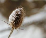 Заусенец покрытый с снегом Стоковые Изображения