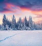 Захватывающее sunrisise зимы в прикарпатских горах с снегом Стоковые Фотографии RF