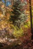 Захватывающие красота и спокойствие Sedona Аризоны Стоковые Фотографии RF