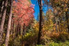 Захватывающие красота и спокойствие Sedona Аризоны Стоковые Фото