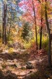 Захватывающие красота и спокойствие Sedona Аризоны Стоковое Фото
