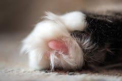Захват конца-вверх ноги ` s кота Макрос Стоковая Фотография RF