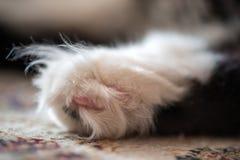 Захват конца-вверх ноги ` s кота Макрос Стоковое фото RF
