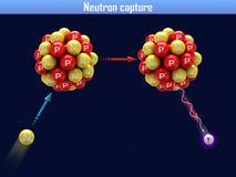 Захват нейтрона иллюстрация вектора