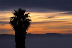 Заход солнца Африки над холмами с ладонью стоковые изображения rf