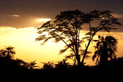 заход солнца Африки Стоковые Фото