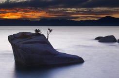 заход солнца бонзаев Стоковая Фотография