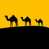 заход солнца верблюда Иллюстрация вектора