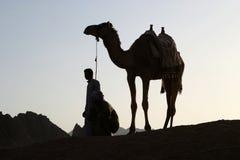 заход солнца верблюда Стоковые Фото