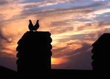 заход солнца влюбленности птиц Стоковые Фотографии RF