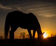 Заход солнца восхода солнца силуэта лошади Стоковая Фотография