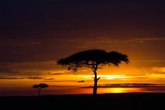 Заход солнца в Африке стоковые фотографии rf