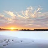 Заход солнца в зиме. Стоковое Изображение