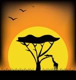 Заход солнца в изображении Африки Стоковое Изображение RF