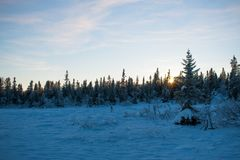 Заход солнца в лесе, декабрь стоковое фото rf