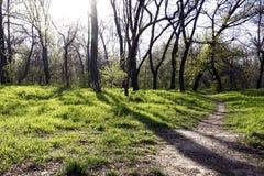 Заход солнца в лесе с длинными тенями дерева и зеленой травой Стоковые Фотографии RF