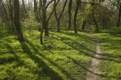 Заход солнца в лесе с длинными тенями дерева и зеленой травой Стоковое Изображение