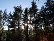 Заход солнца в лесном дереве стоковое изображение rf