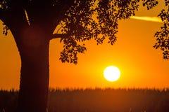 Заход солнца в летнем времени с деревом Стоковое Изображение