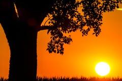 Заход солнца в летнем времени с деревом Стоковые Фотографии RF
