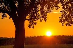 Заход солнца в летнем времени с деревом Стоковая Фотография RF