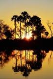 Заход солнца в перепаде Okavango - Африка стоковые изображения