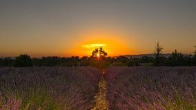 Заход солнца в поле лаванды Стоковые Изображения RF