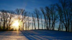 Заход солнца в пуще зимы видеоматериал
