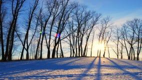 Заход солнца в пуще зимы сток-видео