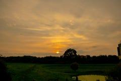 Заход солнца в пуще стоковые фото