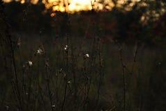 Заход солнца в пуще стоковое фото