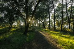Заход солнца в тропе стоковое фото