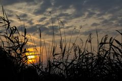 Заход солнца в тростниках Стоковые Фото