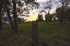 Заход солнца в яблоневом саде стоковое изображение