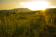 заход солнца горы цветка Стоковое Изображение RF