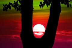 заход солнца дальше между деревом силуэта в выравнивать небо стоковые изображения