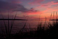 Заход солнца за травой стоковые фото
